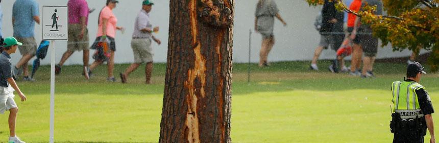 arbre foudroyé