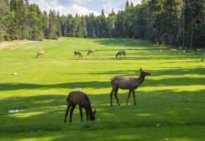 Golf-éco-responsable